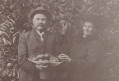 Alpheus James Adams and wife Ellen Jane Hannah Adams, picking or